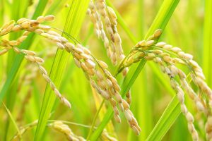 日本農業「第一の標的」